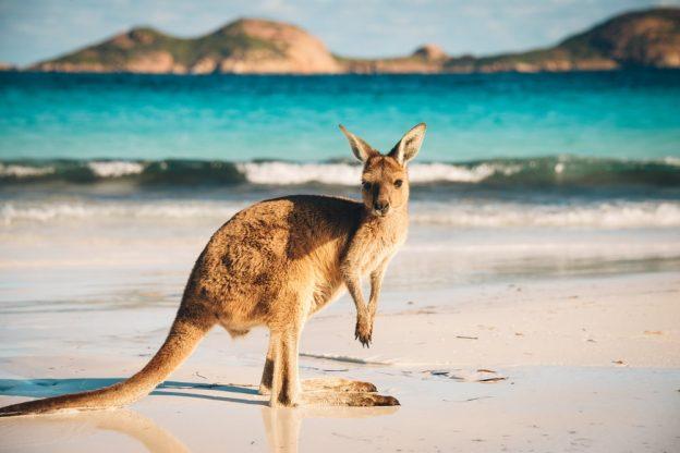 The Best way to Enjoy in Western Australia